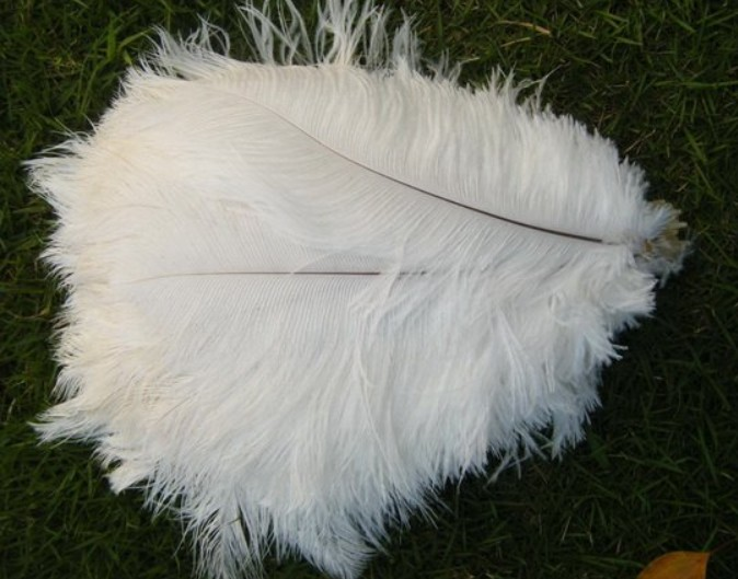 free shipping12-14inch ostrich feather,wedding centerpiece ostrich feather,decorative feather