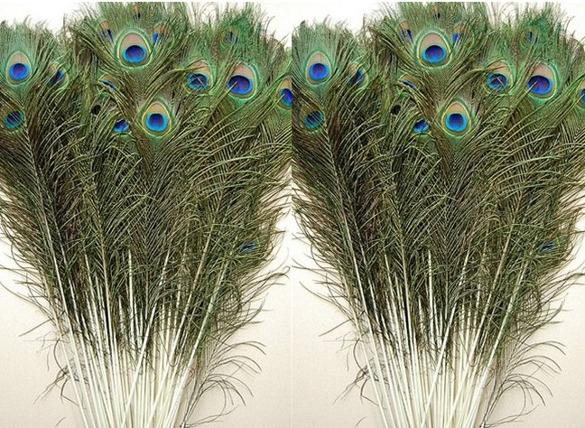 more than 50cm peacock feathers