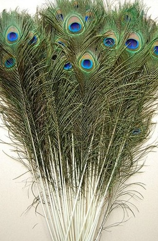 more than 25cm peacock feathers