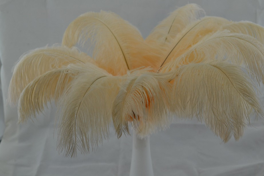 FREE SHIPPINHG 100pcs Ivory corlor ostrich feather for Wedding Table centerpieces,ostrich plumes,ostrich centerpiece,eiffel tower centerpiece