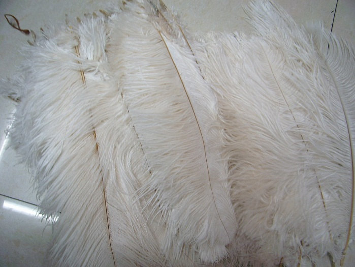440pieces 16-18inch off white ostrich feathers