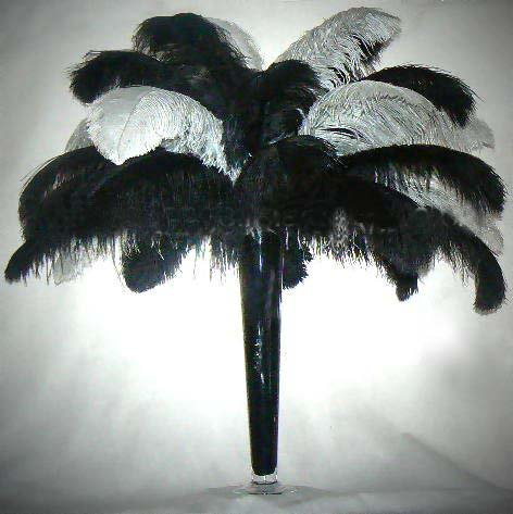 14-16-Ostrich-Plume-Feather